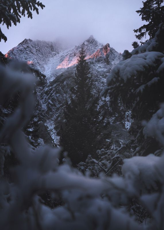 moring light, sunrise, alpenglow, mountains, winter, forest Alpenglow 00photo preview