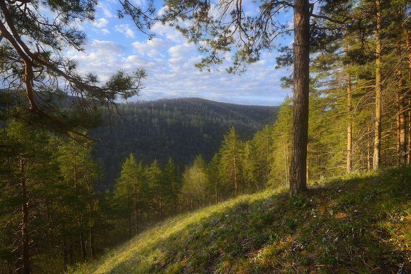 Уголки весенних Жигулей.photo preview