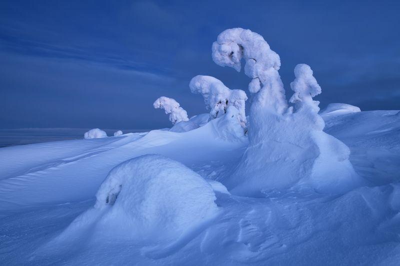 Голубые лебеди...photo preview
