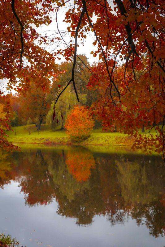 золотая осень, осень ,пейзаж, природа ***photo preview