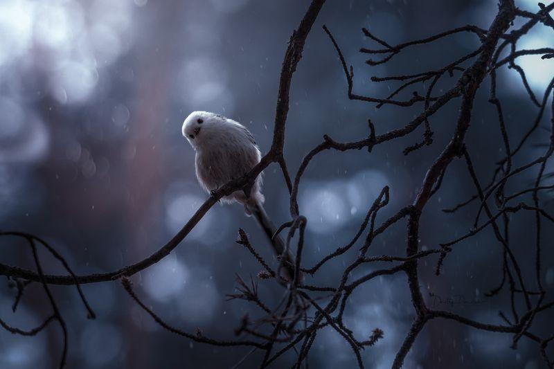 природа, лес, поля, огороды, животные, птицы, макро Знакомствоphoto preview