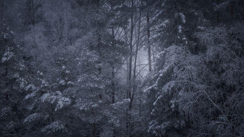 зима, лес, деревья, снег, образы, ленинградская область Образы зимыphoto preview