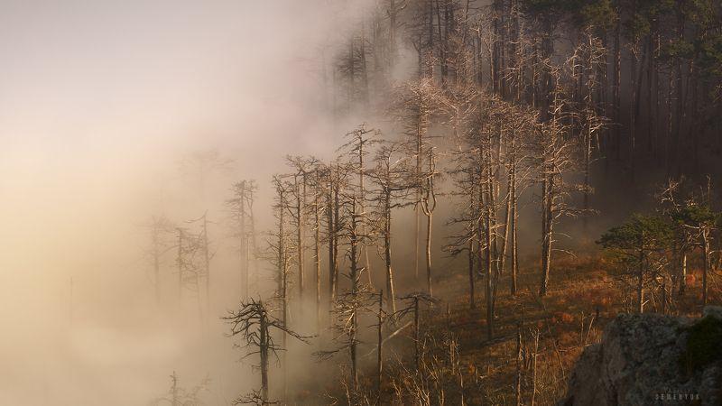 крым, ялта, никитская яйла, вечер, облака, туман, горы, crimea, mountain, mist, clouds, sunset. Облачное наступление.photo preview