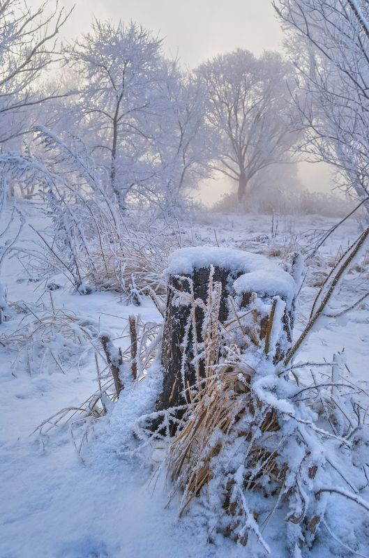 зима,иней,холод,мороз,сказка,новый год,белый снег,деревья,лёд,вода,туман,утро,пень Зимний пень...photo preview