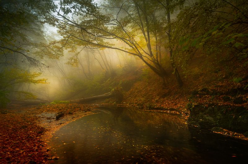 landscape nature scenery forest wood autumn mist misty fog foggy river mountain staraplanina bulgaria туман лес Autumn sonataphoto preview