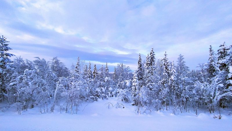 Холодный рассветphoto preview