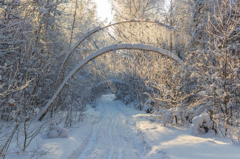 зима, лес, заповедник, лыжня, природа, снег photo preview