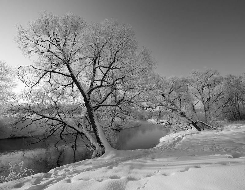 Зимы серебряный нарядphoto preview