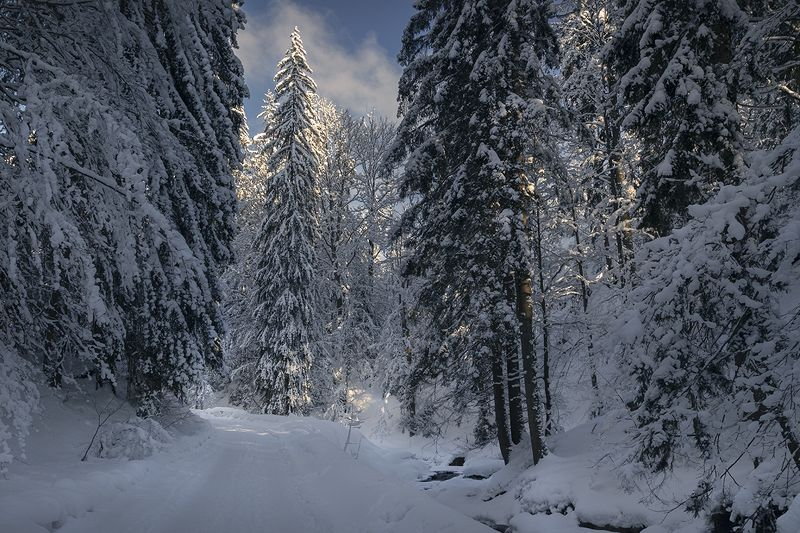 Winter trail in the Beskidsphoto preview