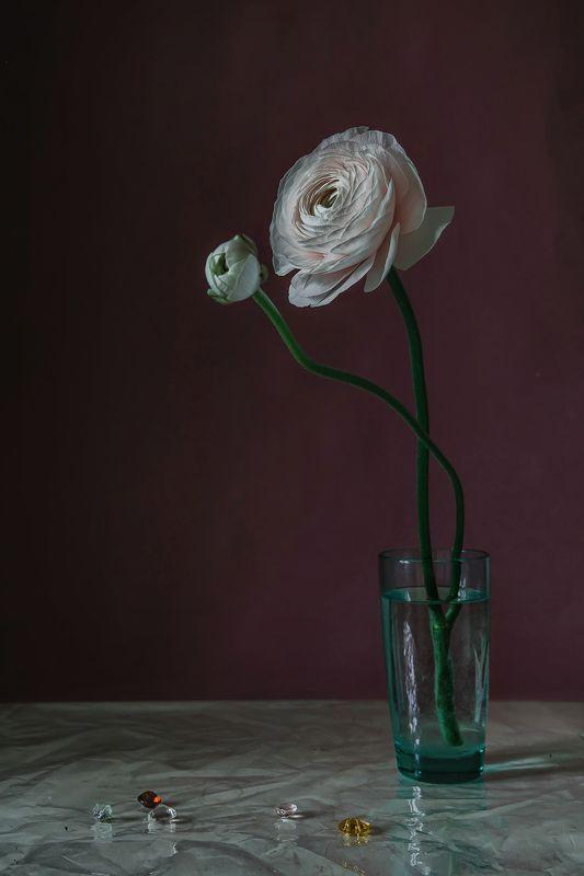 натюрморт, стекло, цветы, ранункулюс Ранункулюсphoto preview