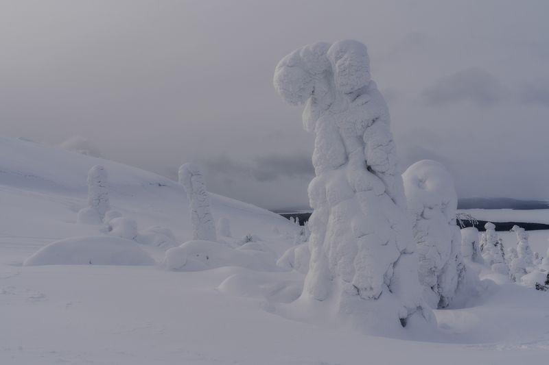 Снежные исполиныphoto preview
