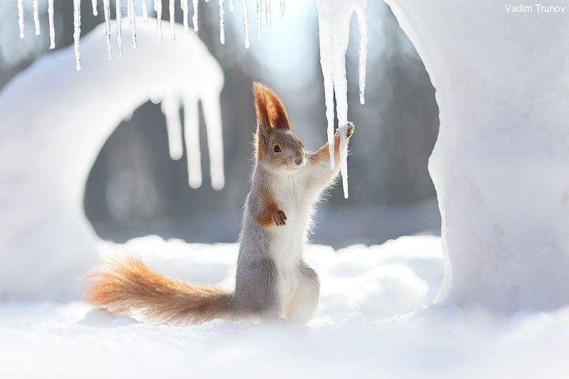 белка, squirrel, лёд, ice age Ice agephoto preview