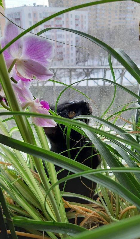 кошка Весна...photo preview