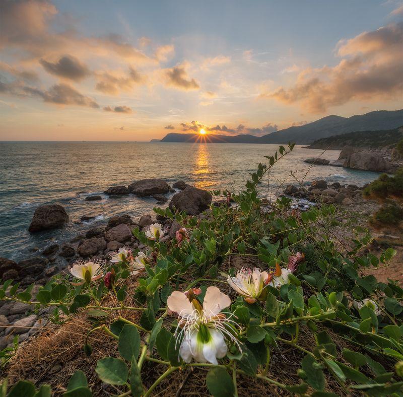 крым, балаклава, мыс айя, пляж инжир, закат, лето Балаклава. Пляжи Инжирphoto preview