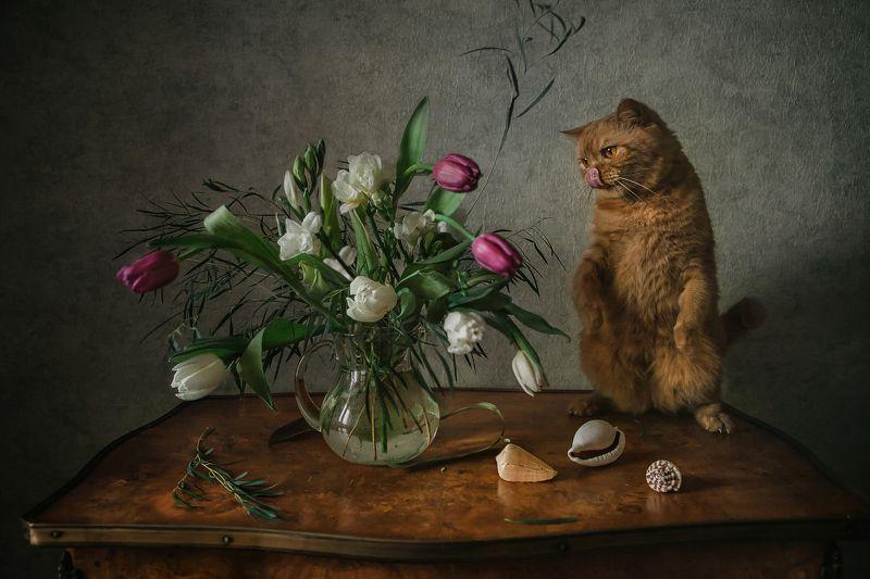 натюрморт, кот, цветы, ракушки Кот и весенний букетphoto preview