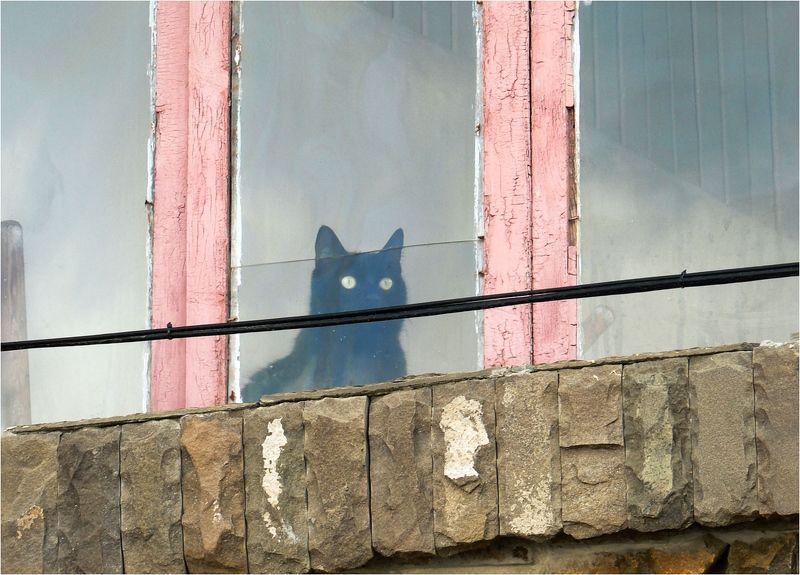 кот, окно, глаза Эти глаза напротивphoto preview