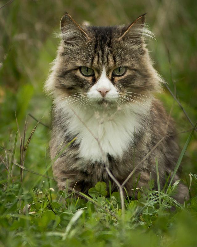 кот Взгляд хищникаphoto preview