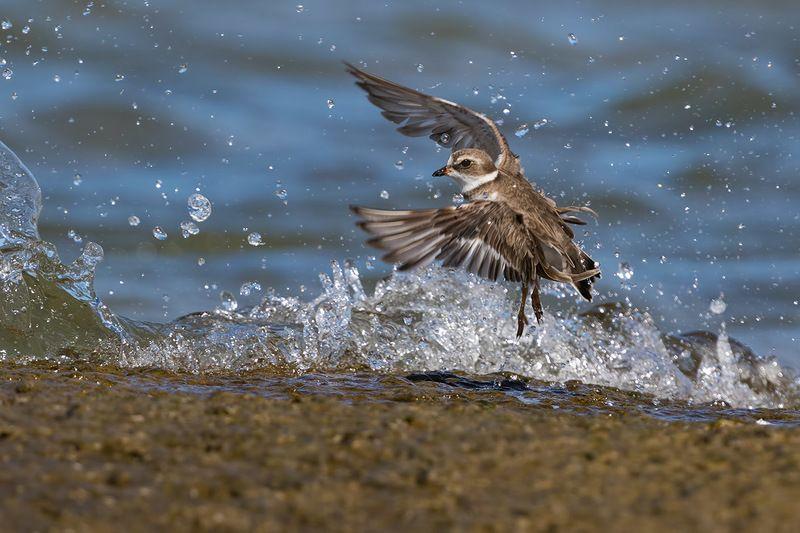 птицы, уругвай, россия Курортникphoto preview