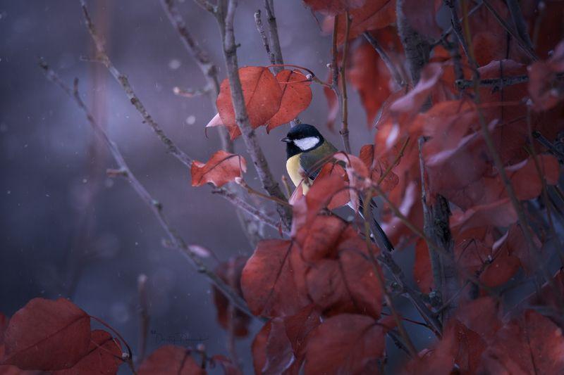природа, лес, поля, огороды, животные, птицы, макро Вот такая зима бываетphoto preview