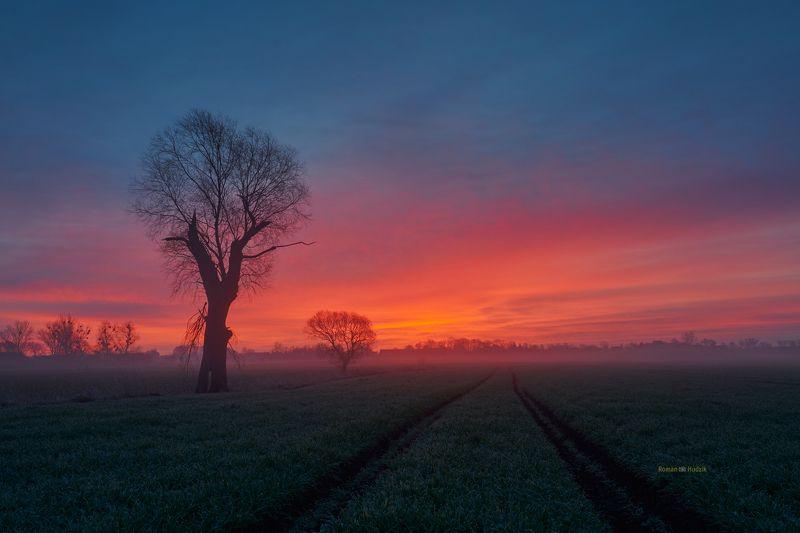 Kociewie fields, landscape, Poland, field, sunrise, fog, tree, Kociewie fields фото превью