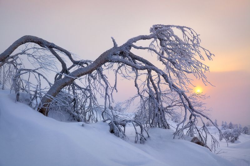 урал, зима, рассвет, мороз, утро, свет ***photo preview