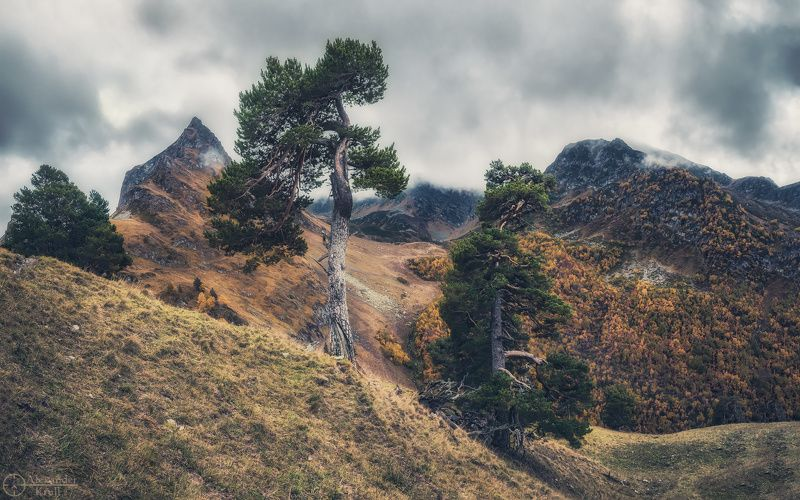 Патриархи гор...photo preview