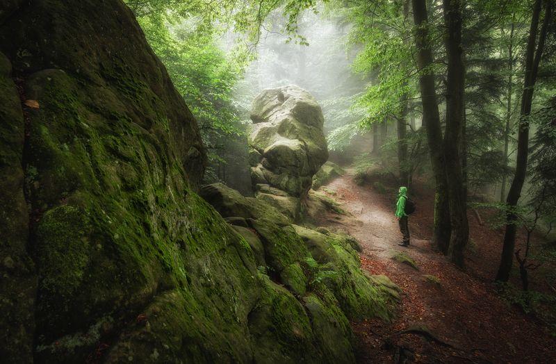 mountains, forest, mountains, rock, stone, poland Orli Kamień, Sanokphoto preview