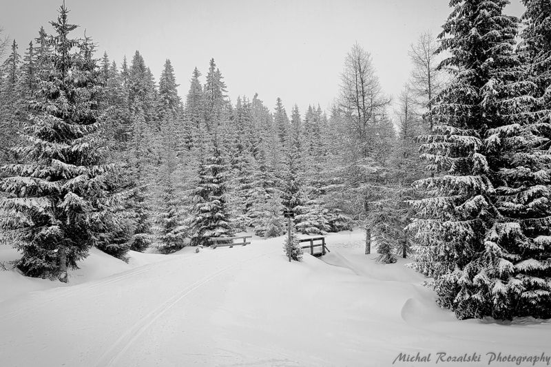 winter, ,season, ,blackandwhite, ,snow, ,landscape, ,trees, , The Chronicles of Narniaphoto preview