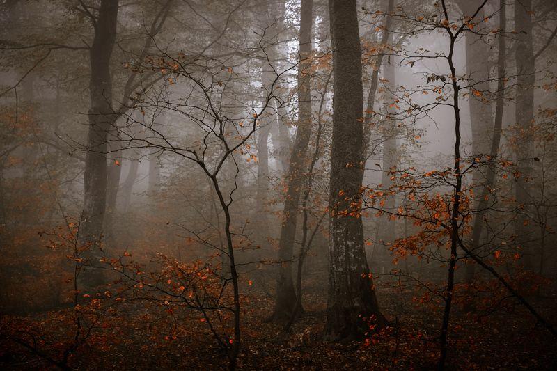 Осенний мотивphoto preview