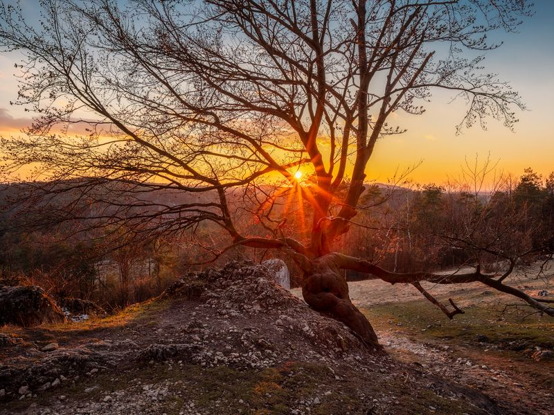 nature, landscape, colors, sunset, tree sunset on Zborów Mountainphoto preview