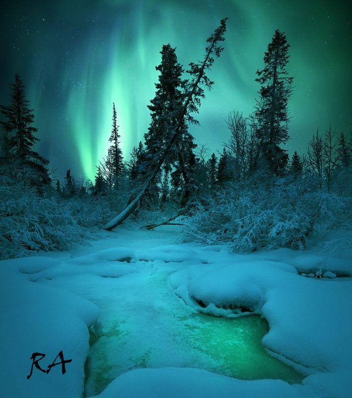 полярное сияние, aurora borealis, северное сияние, кольский полуостров Forest Guardphoto preview