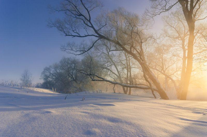 туман, московская область, утро, природа, пейзаж, зима, мороз, солнце Утренний светphoto preview