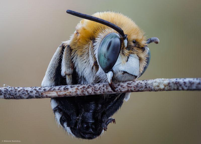Про пчёлphoto preview