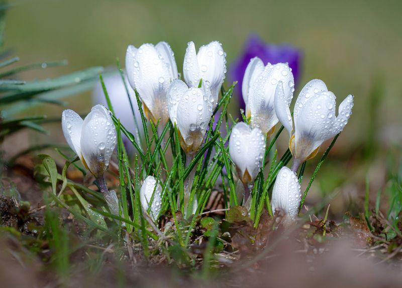 праздник,природа, весна,цветы С Праздником Милые Женщины!photo preview