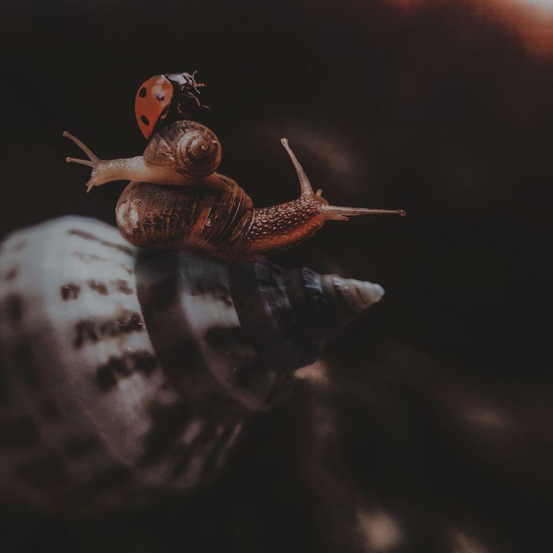 макро, арт,природа ,насекомые Акробатыphoto preview
