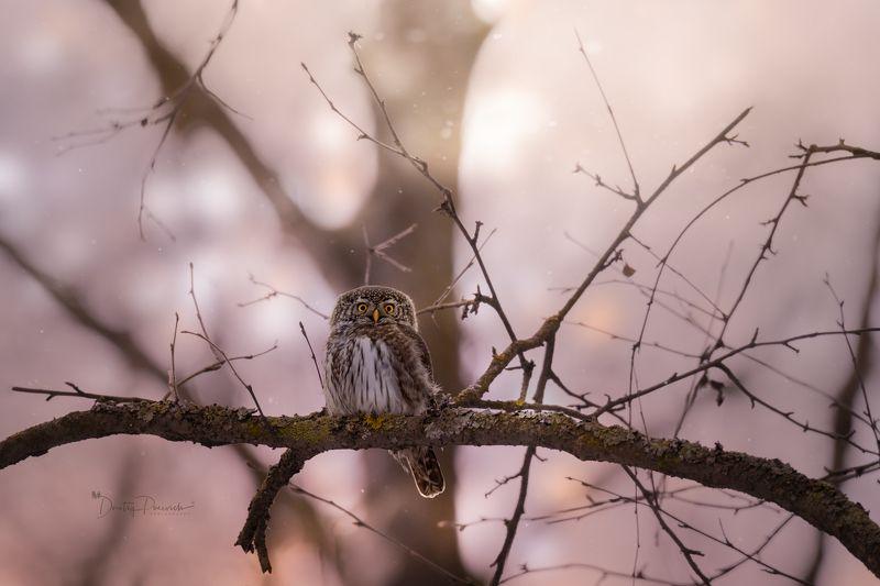природа, лес, поля, огороды, животные, птицы, макро Здрасьте ..., с Праздничком ! :)photo preview