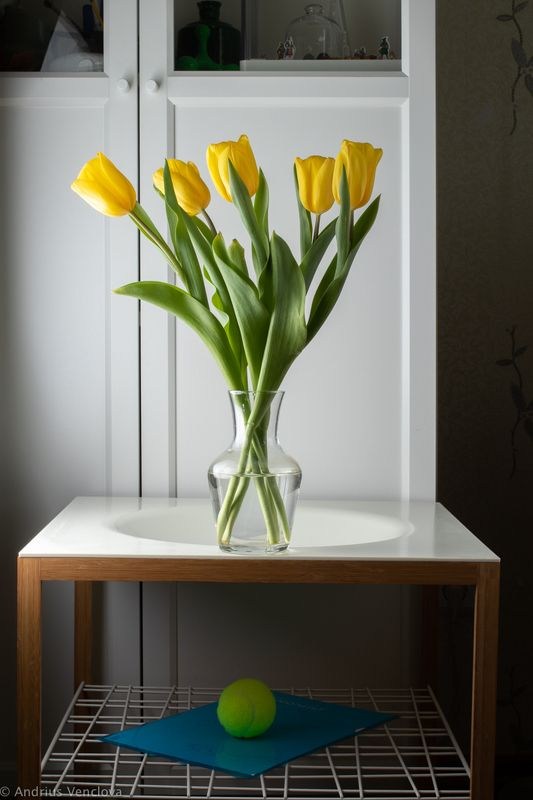 Yellow tulipsphoto preview