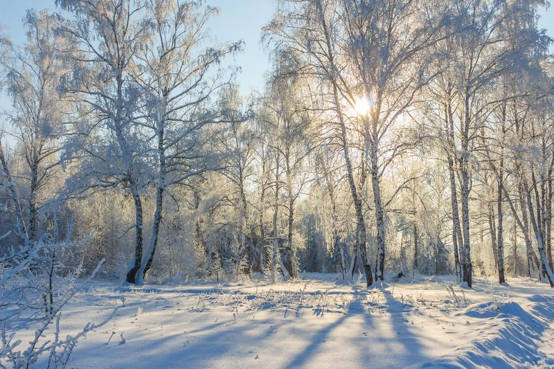 снег, природа, мороз, лес, иней, зима photo preview