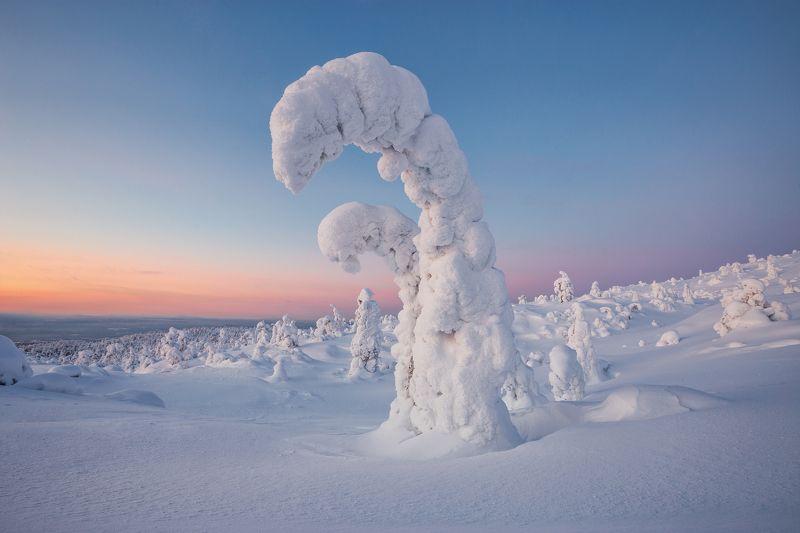 2021, россия, кольский, мурманская область, заполярье, зима, февраль, пейзаж, снег, вечер, деревья, гора, волосяная, закат В зимнем нарядеphoto preview