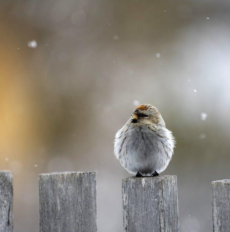 А снег все идет и идетphoto preview