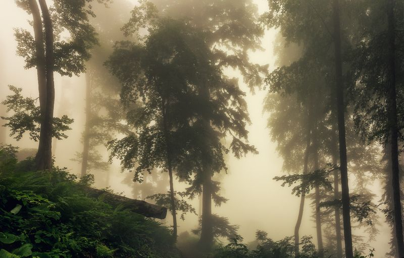 В чаще туманного лесаphoto preview