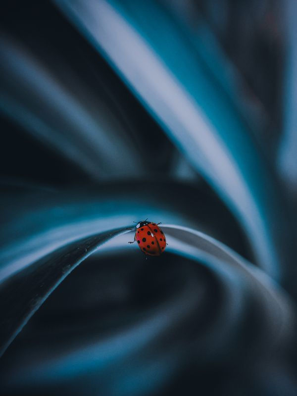 макро, арт,природа ,насекомые Держисьphoto preview
