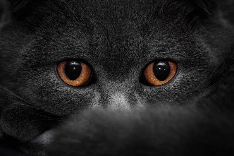 кот, глаза, животные, взгляд Тише мыши, кот на крыше...photo preview