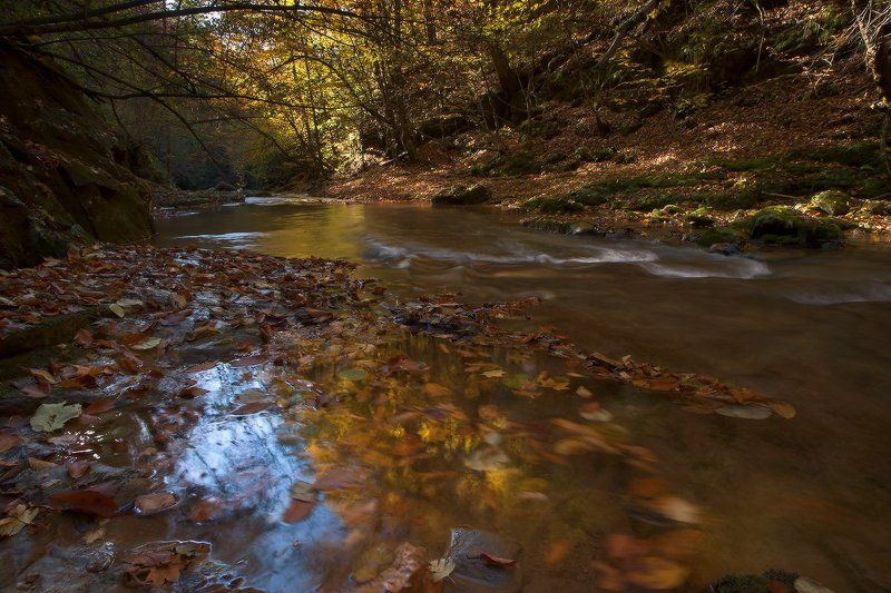 *В багрец и золото одетые леса*photo preview