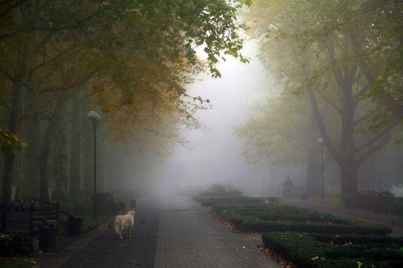 осень, туман, аллея, сквер, собака История одной собакиphoto preview