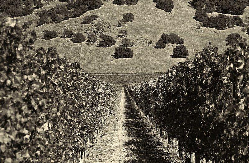 Виноградникphoto preview