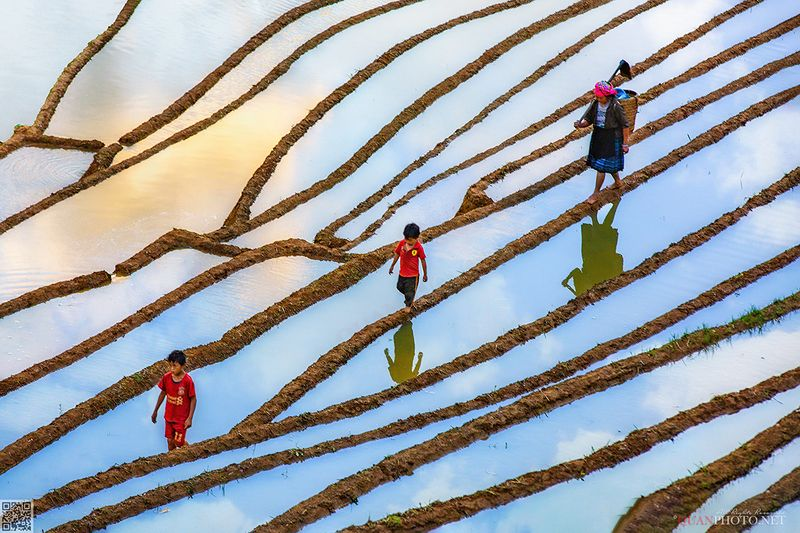 quanphoto, reflections, landscape, rice, terrace, people, ethnic, farmland, agriculture, culture, woman, children, asia, vietnam SkyWayphoto preview
