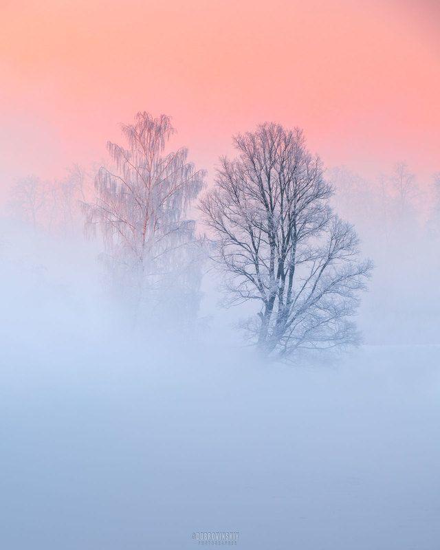 истра, река, туман, иней, рассвет, деревья Двоеphoto preview