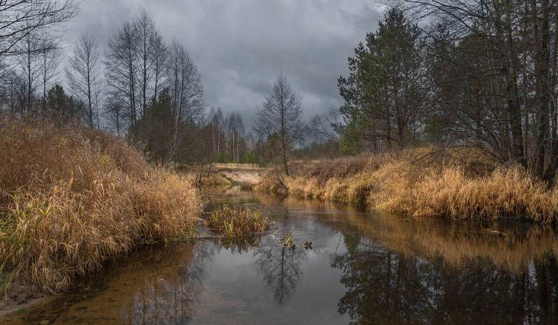 река осень пасмурный день Река Кеза.photo preview