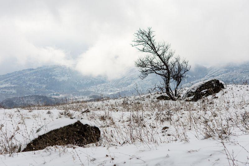 Самотно на хълмаphoto preview